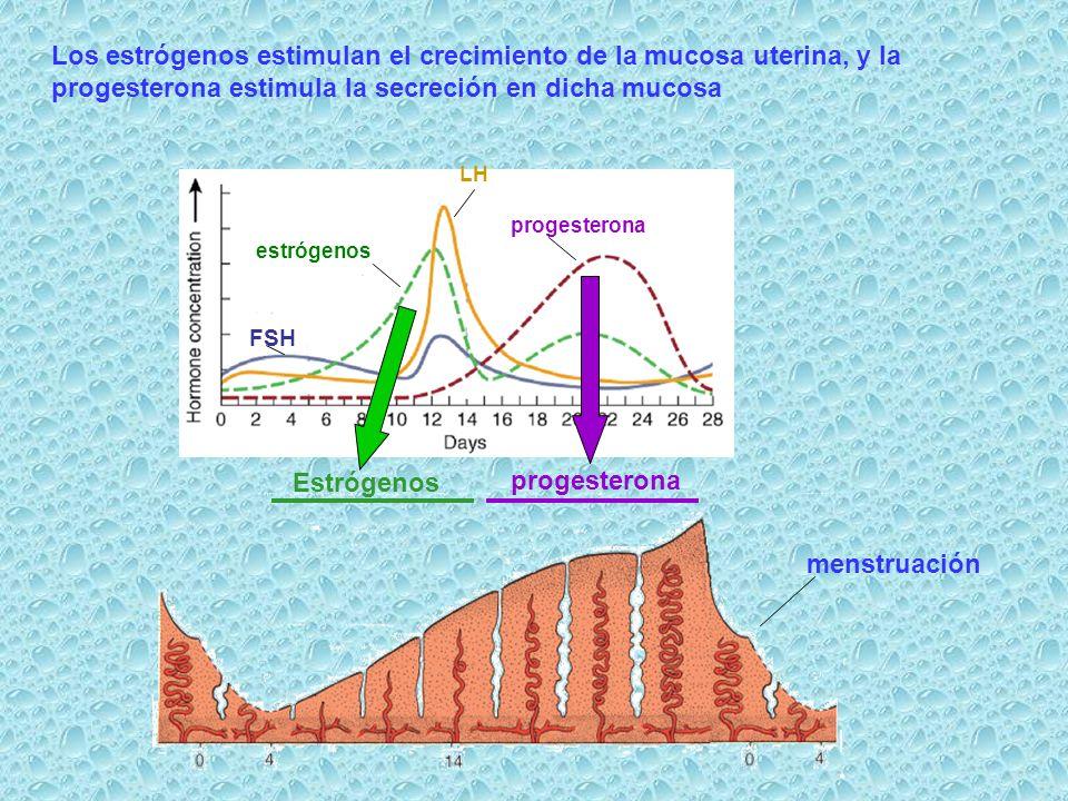 Estrógenos progesterona
