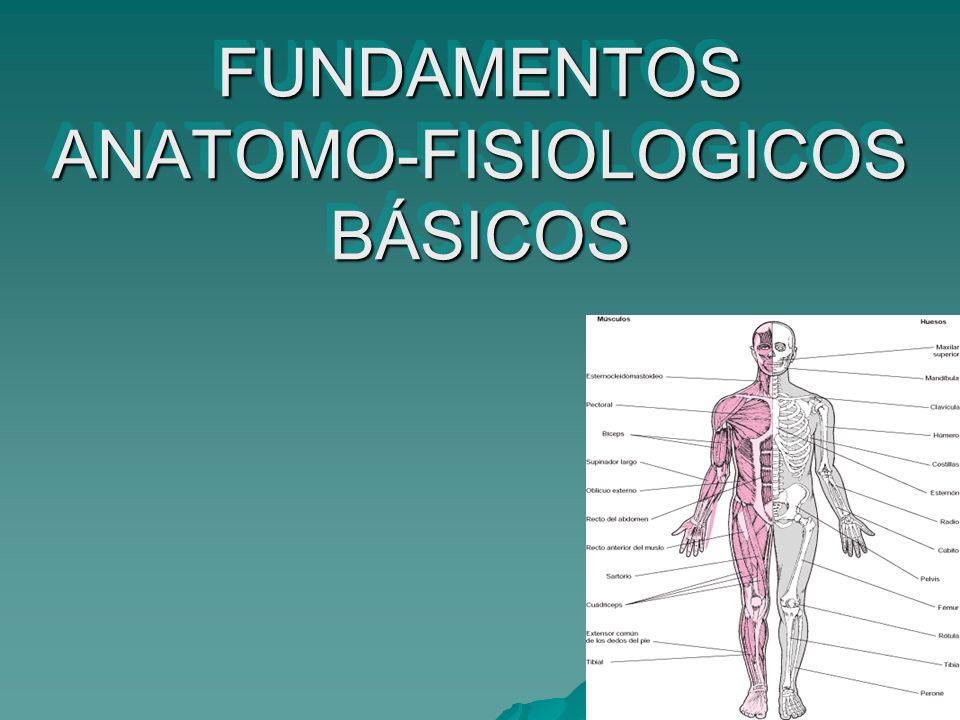 FUNDAMENTOS ANATOMO-FISIOLOGICOS BÁSICOS - ppt video online descargar