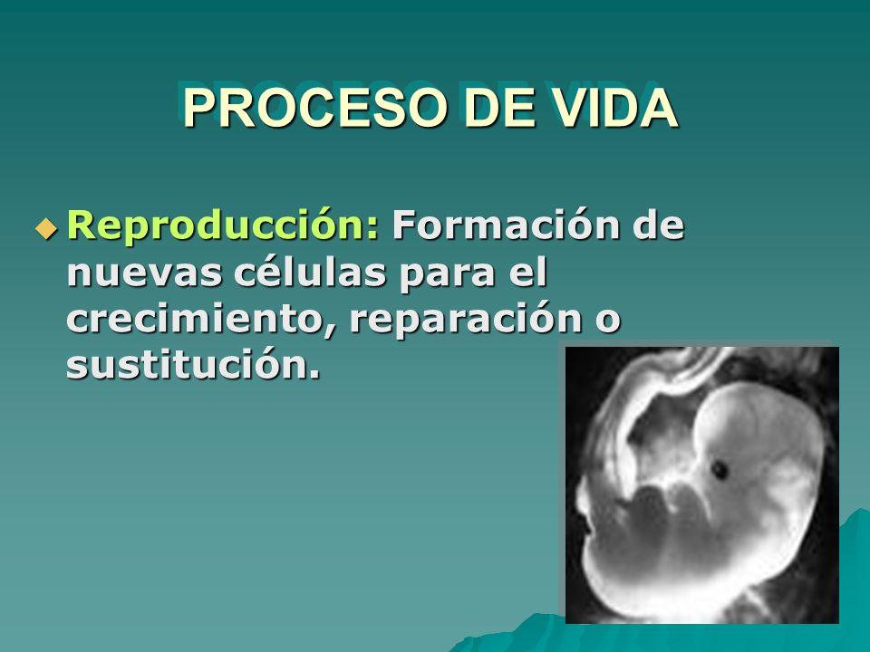PROCESO DE VIDA Reproducción: Formación de nuevas células para el crecimiento, reparación o sustitución.