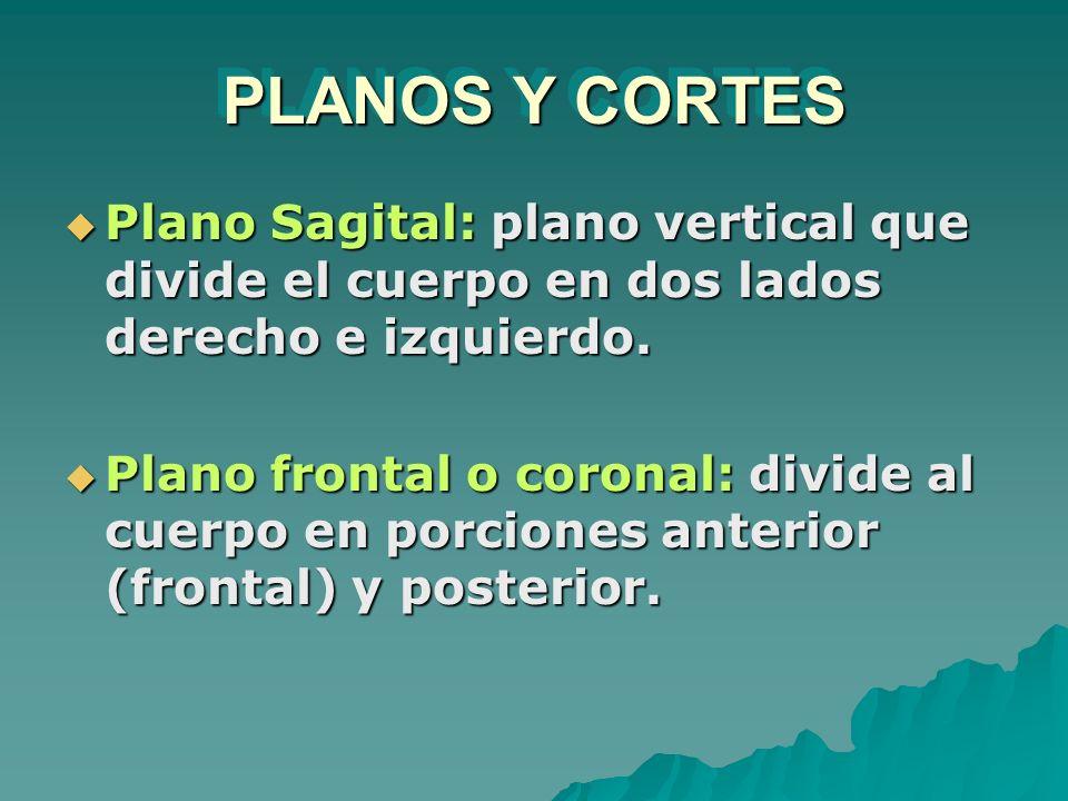 PLANOS Y CORTES Plano Sagital: plano vertical que divide el cuerpo en dos lados derecho e izquierdo.