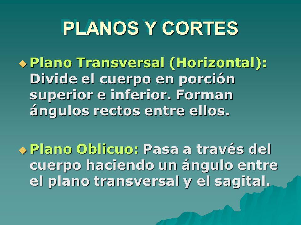PLANOS Y CORTES Plano Transversal (Horizontal): Divide el cuerpo en porción superior e inferior. Forman ángulos rectos entre ellos.
