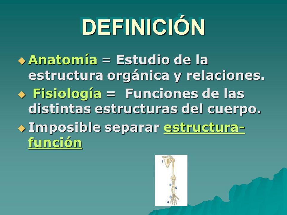 DEFINICIÓN Anatomía = Estudio de la estructura orgánica y relaciones.
