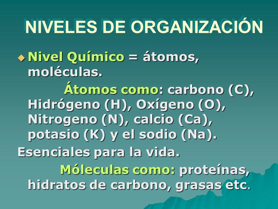 NIVELES DE ORGANIZACIÓN