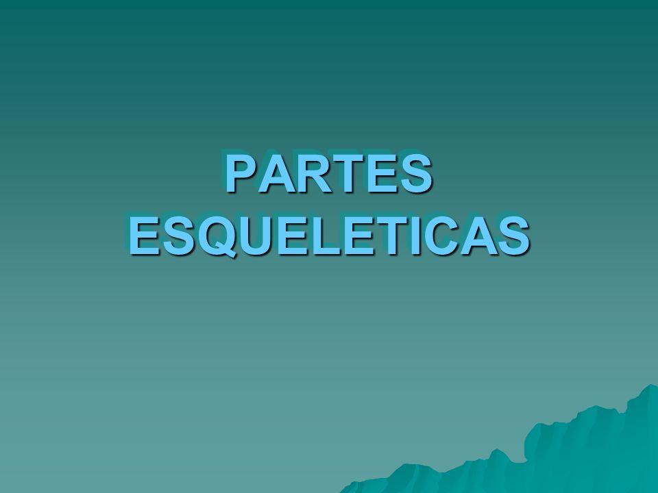 PARTES ESQUELETICAS