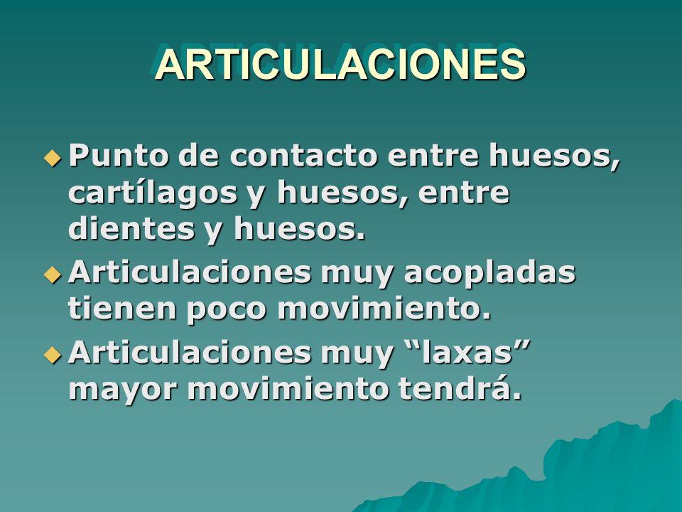 ARTICULACIONES Punto de contacto entre huesos, cartílagos y huesos, entre dientes y huesos. Articulaciones muy acopladas tienen poco movimiento.