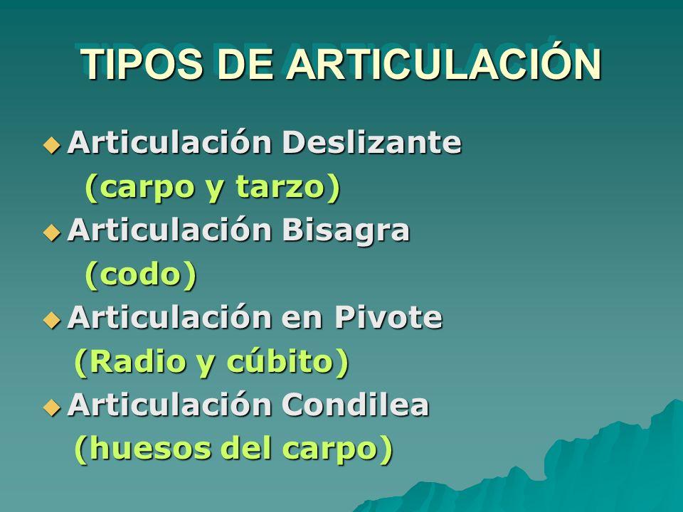 TIPOS DE ARTICULACIÓN Articulación Deslizante (carpo y tarzo)
