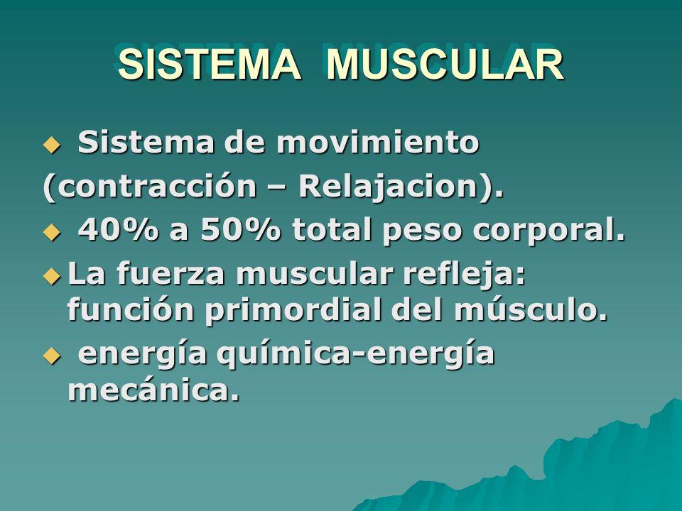 SISTEMA MUSCULAR Sistema de movimiento (contracción – Relajacion).