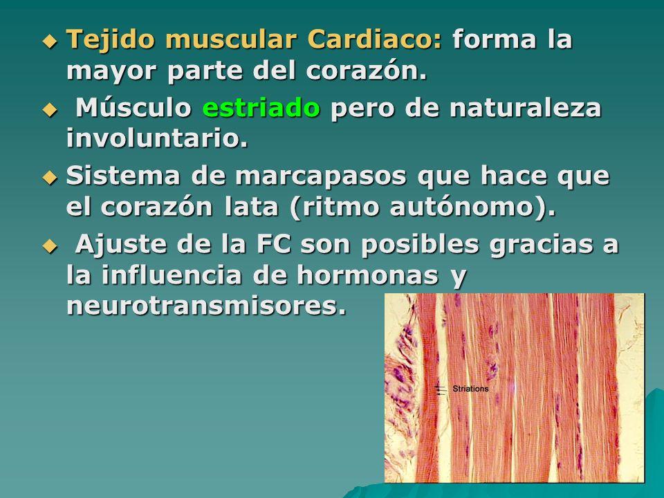 Tejido muscular Cardiaco: forma la mayor parte del corazón.