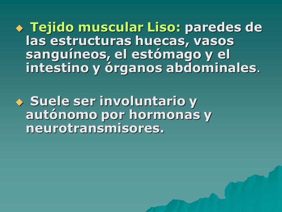 Tejido muscular Liso: paredes de las estructuras huecas, vasos sanguíneos, el estómago y el intestino y órganos abdominales.