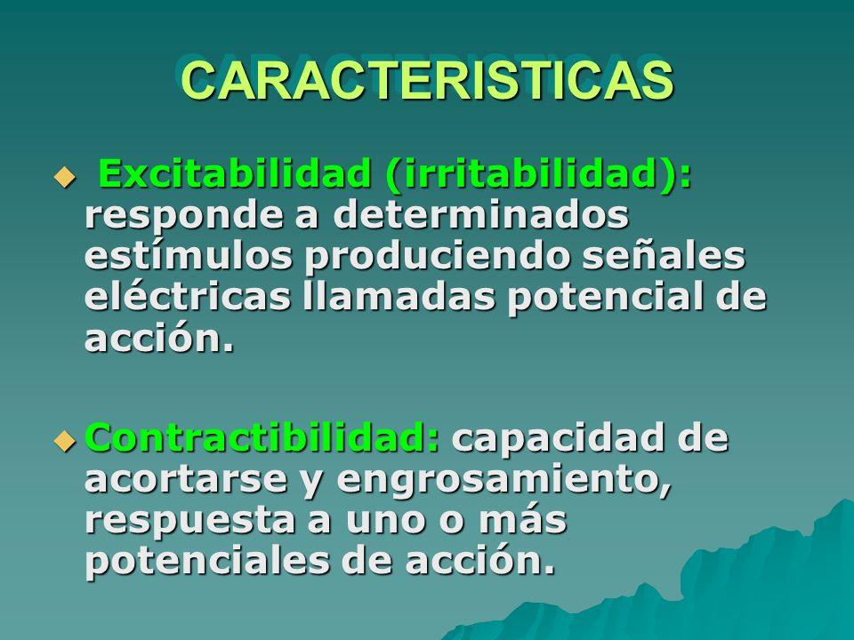 CARACTERISTICAS Excitabilidad (irritabilidad): responde a determinados estímulos produciendo señales eléctricas llamadas potencial de acción.
