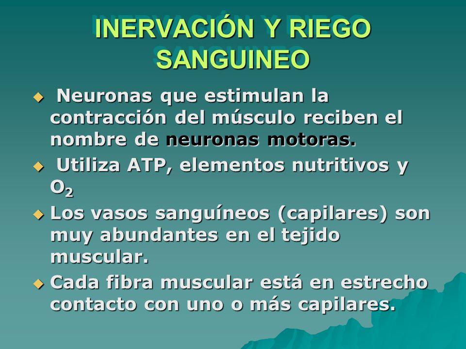 INERVACIÓN Y RIEGO SANGUINEO