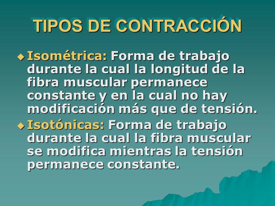 TIPOS DE CONTRACCIÓN