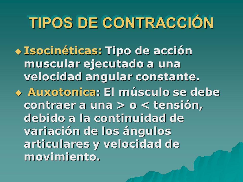 TIPOS DE CONTRACCIÓN Isocinéticas: Tipo de acción muscular ejecutado a una velocidad angular constante.