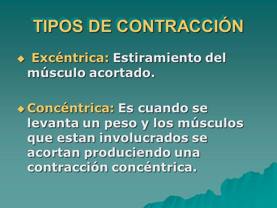 TIPOS DE CONTRACCIÓN Excéntrica: Estiramiento del músculo acortado.