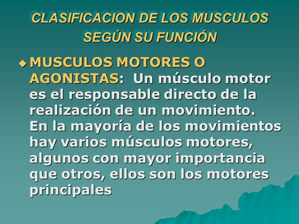 CLASIFICACION DE LOS MUSCULOS SEGÚN SU FUNCIÓN