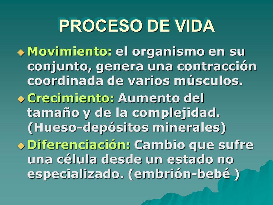 PROCESO DE VIDA Movimiento: el organismo en su conjunto, genera una contracción coordinada de varios músculos.