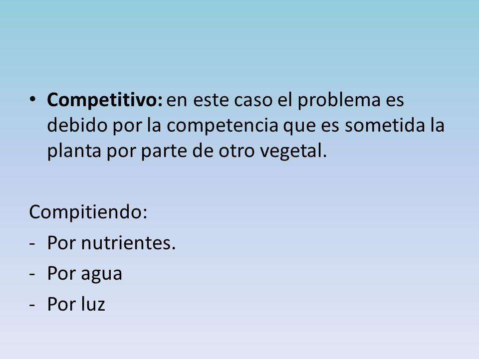 Competitivo: en este caso el problema es debido por la competencia que es sometida la planta por parte de otro vegetal.