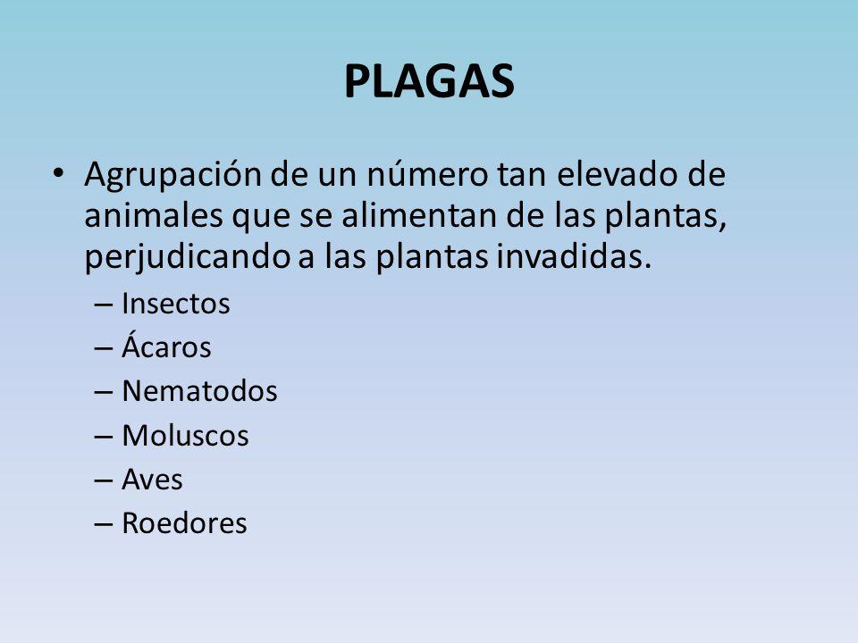 PLAGAS Agrupación de un número tan elevado de animales que se alimentan de las plantas, perjudicando a las plantas invadidas.