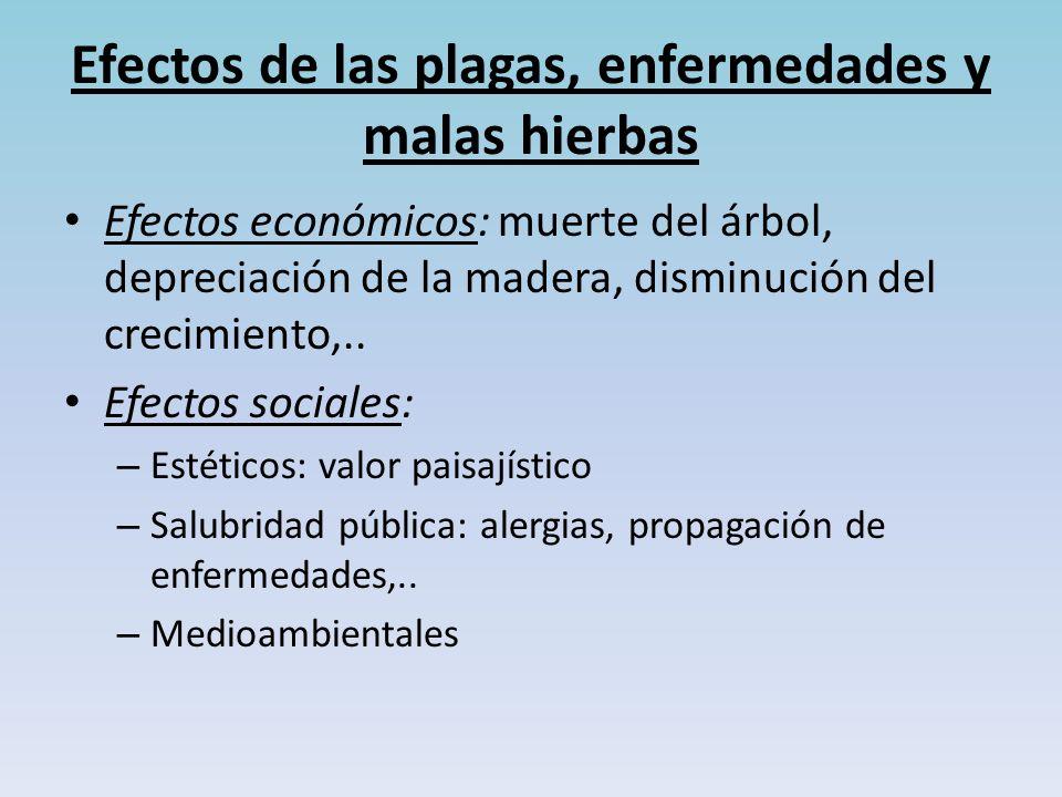Efectos de las plagas, enfermedades y malas hierbas