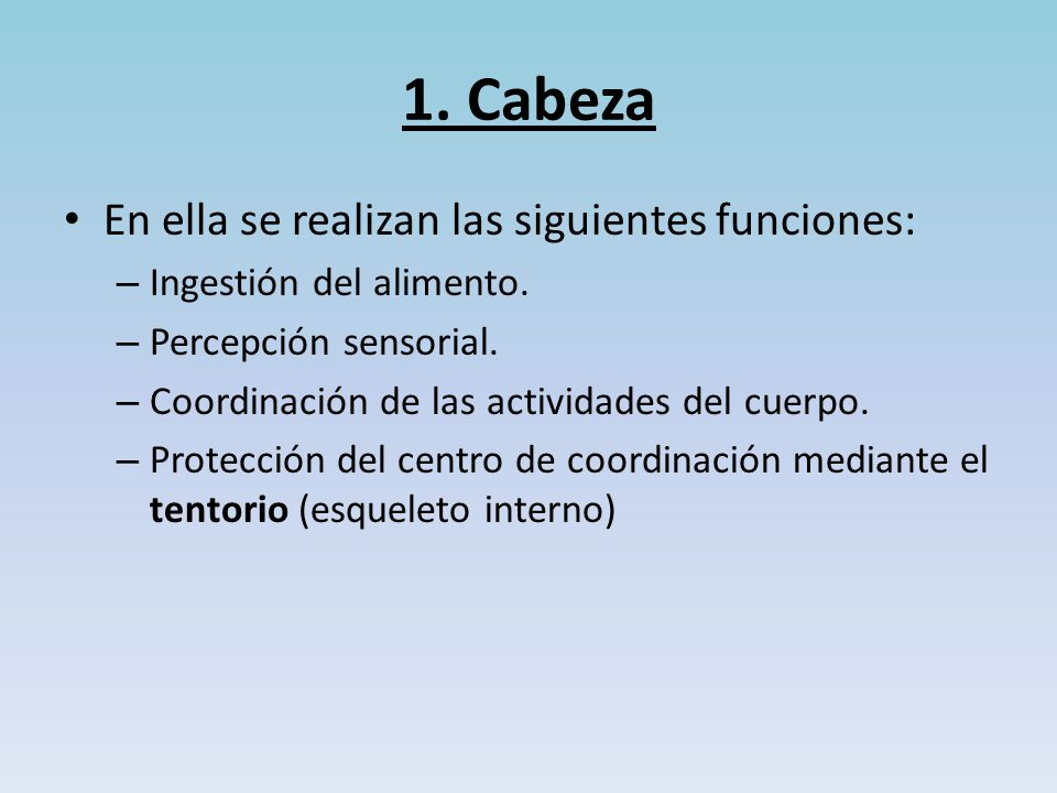 1. Cabeza En ella se realizan las siguientes funciones: