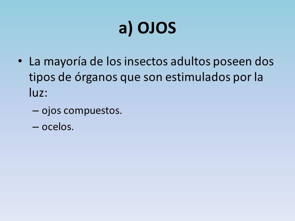 a) OJOS La mayoría de los insectos adultos poseen dos tipos de órganos que son estimulados por la luz: