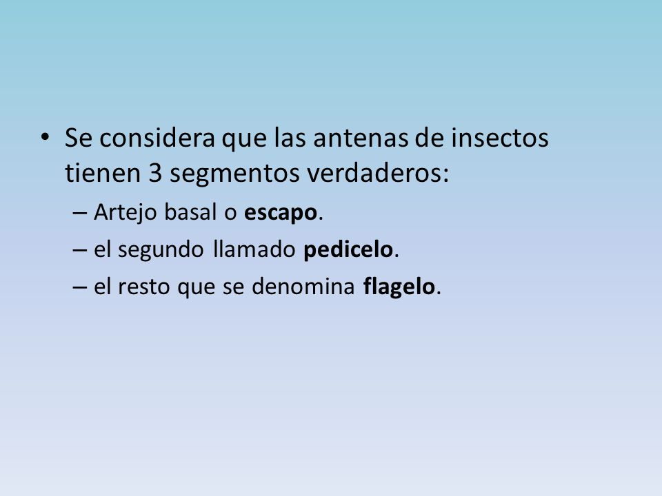 Se considera que las antenas de insectos tienen 3 segmentos verdaderos: