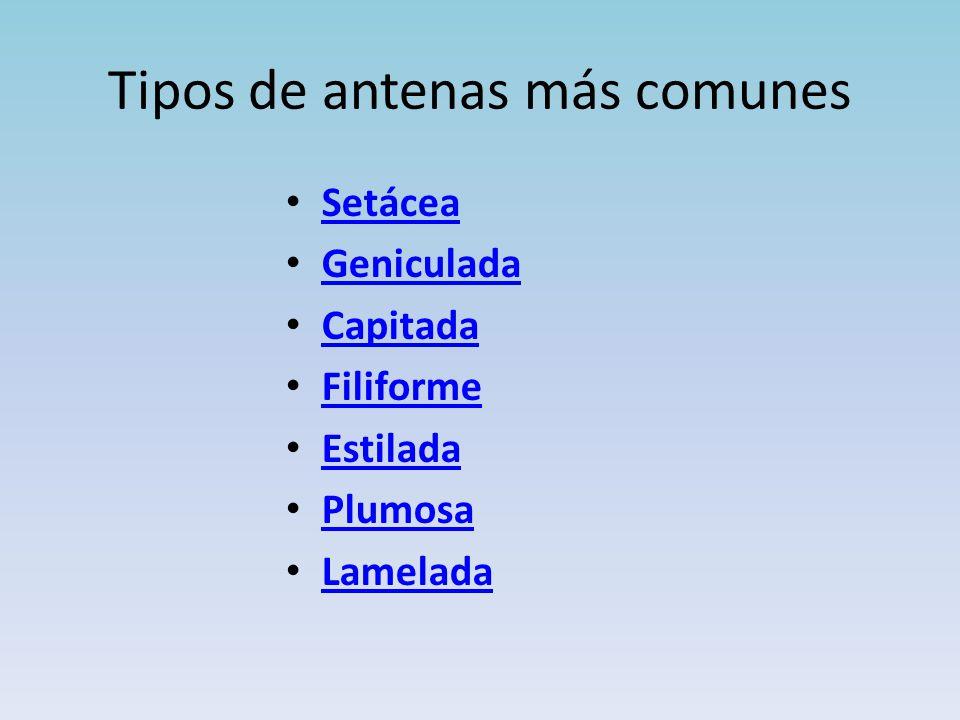 Tipos de antenas más comunes