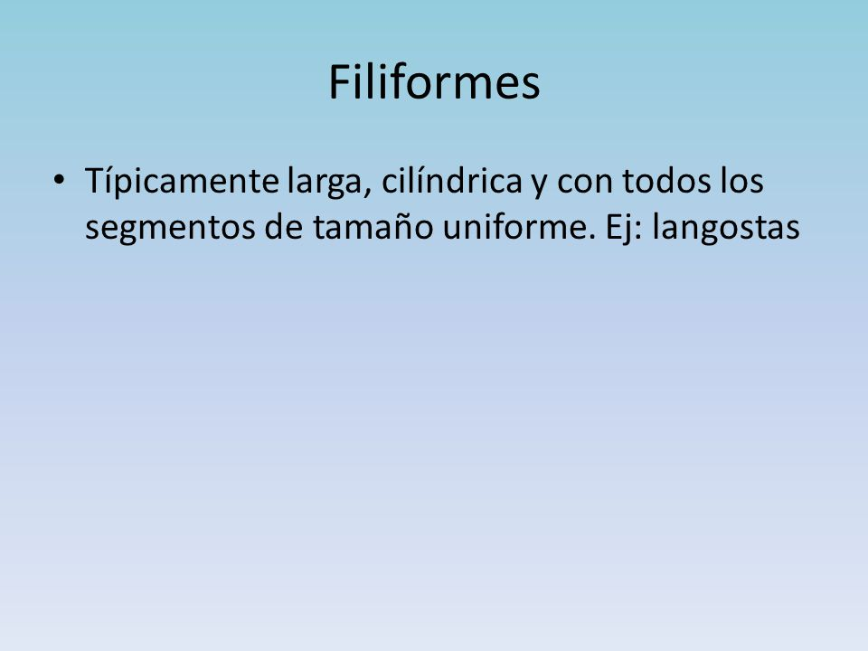 Filiformes Típicamente larga, cilíndrica y con todos los segmentos de tamaño uniforme.