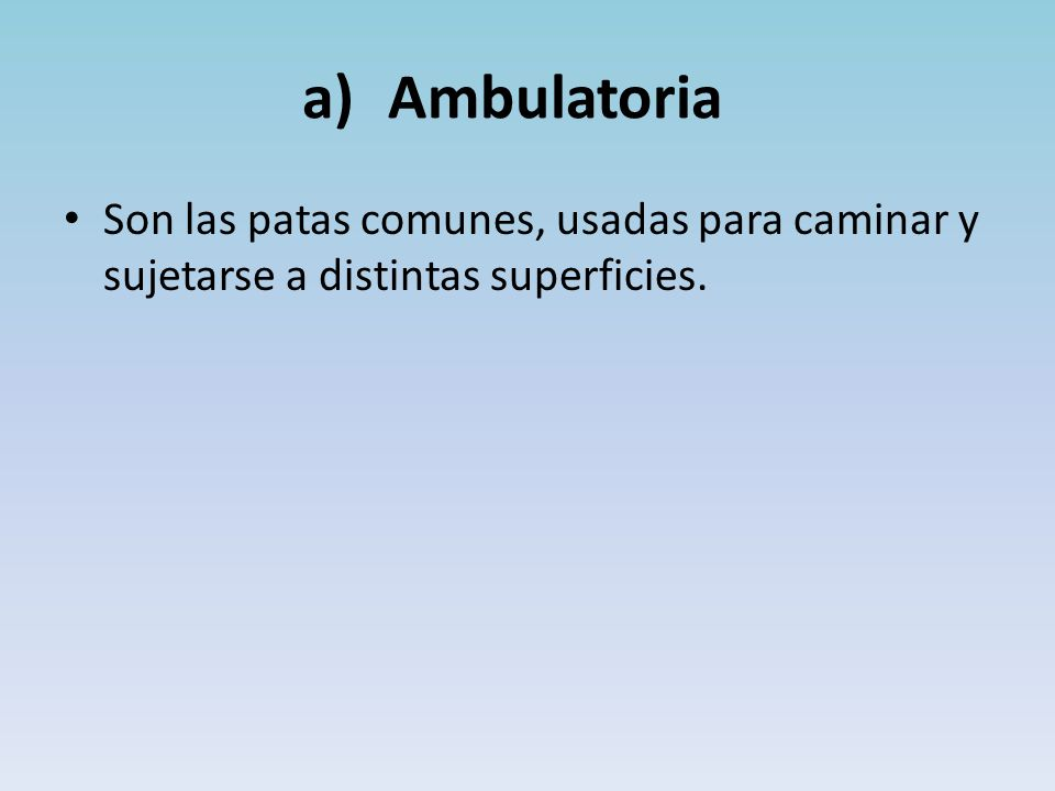 Ambulatoria Son las patas comunes, usadas para caminar y sujetarse a distintas superficies.