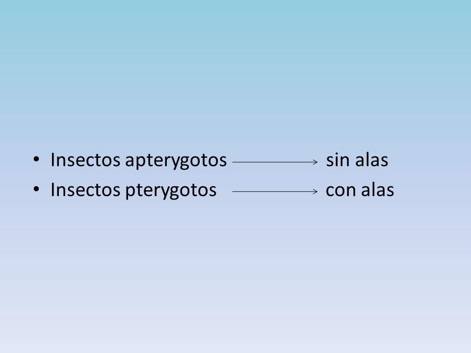 Insectos apterygotos sin alas