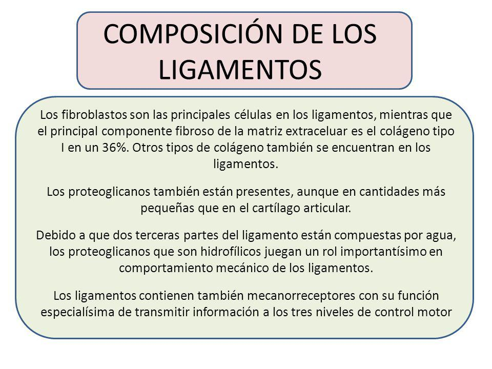 COMPOSICIÓN DE LOS LIGAMENTOS