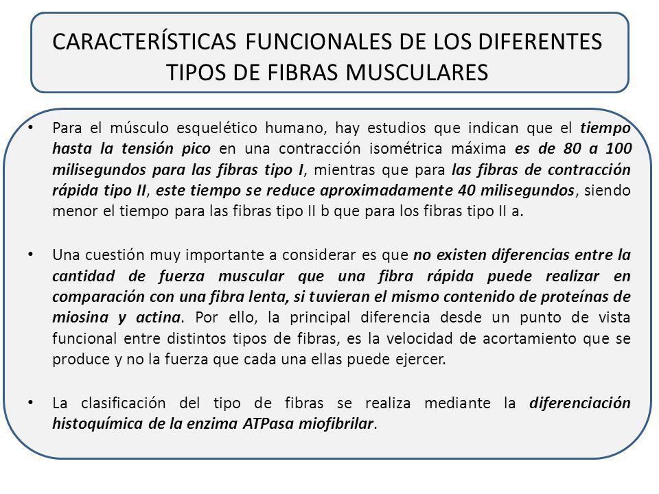 CARACTERÍSTICAS FUNCIONALES DE LOS DIFERENTES TIPOS DE FIBRAS MUSCULARES