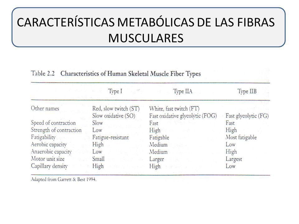 CARACTERÍSTICAS METABÓLICAS DE LAS FIBRAS MUSCULARES