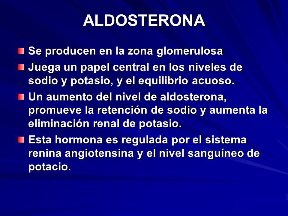 ALDOSTERONA Se producen en la zona glomerulosa