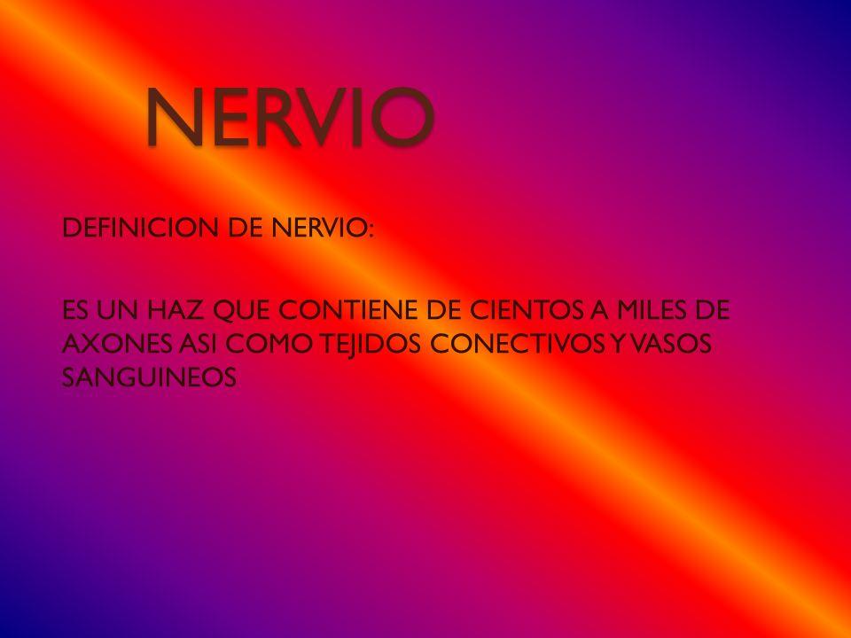 NERVIO DEFINICION DE NERVIO: