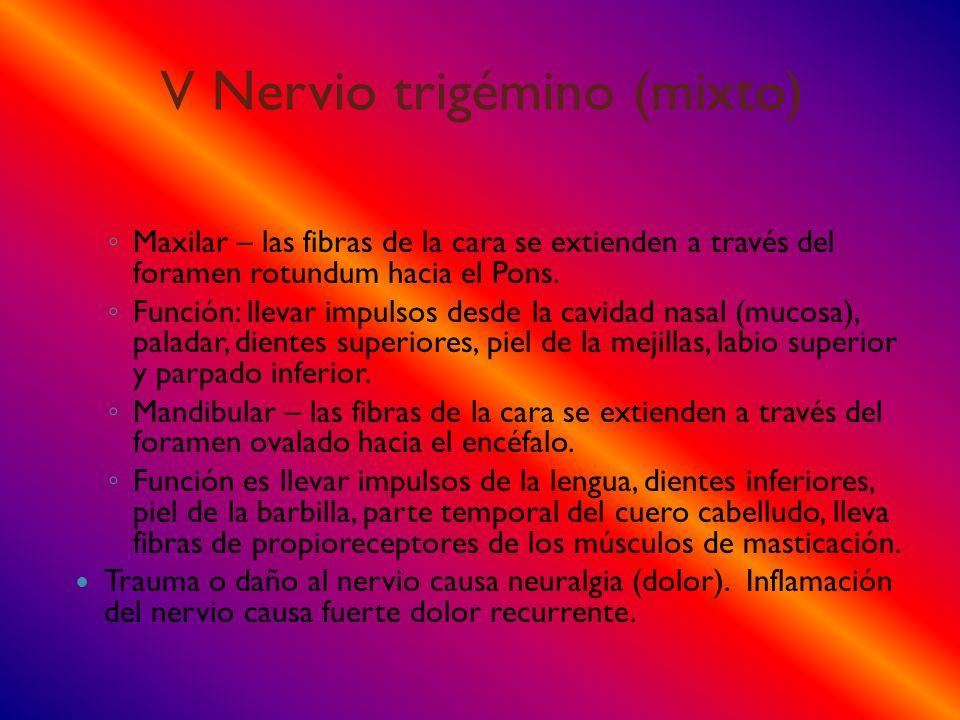 V Nervio trigémino (mixto)