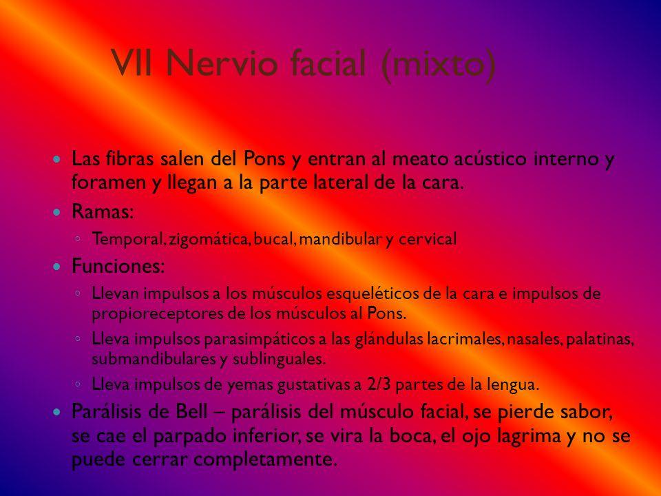 VII Nervio facial (mixto)