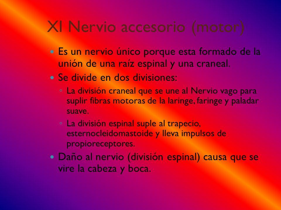 XI Nervio accesorio (motor)