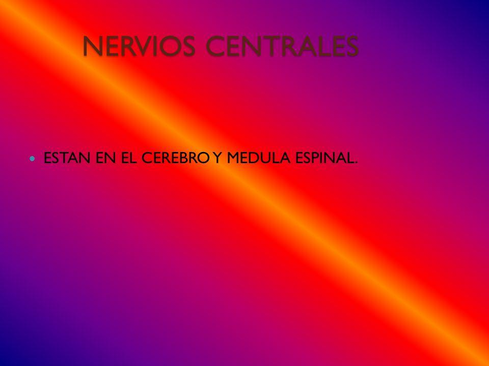 NERVIOS CENTRALES ESTAN EN EL CEREBRO Y MEDULA ESPINAL.