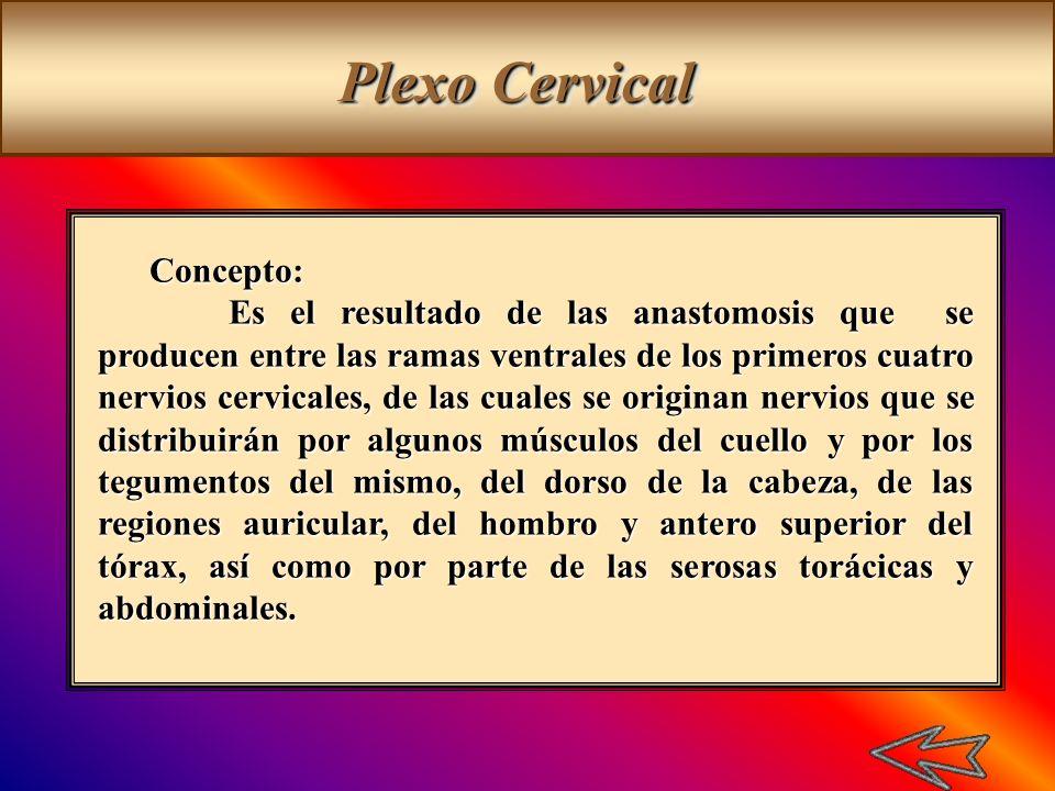 Plexo Cervical Concepto: