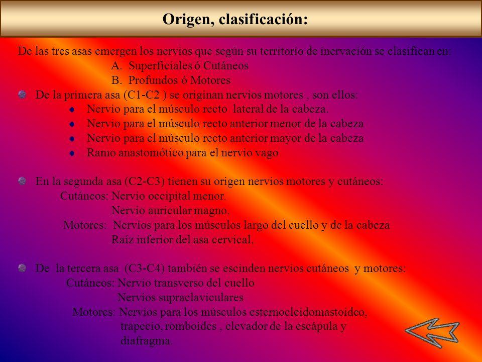 Origen, clasificación: