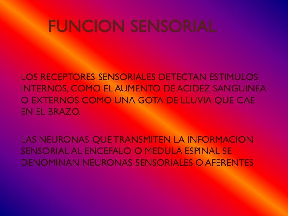 FUNCION SENSORIAL
