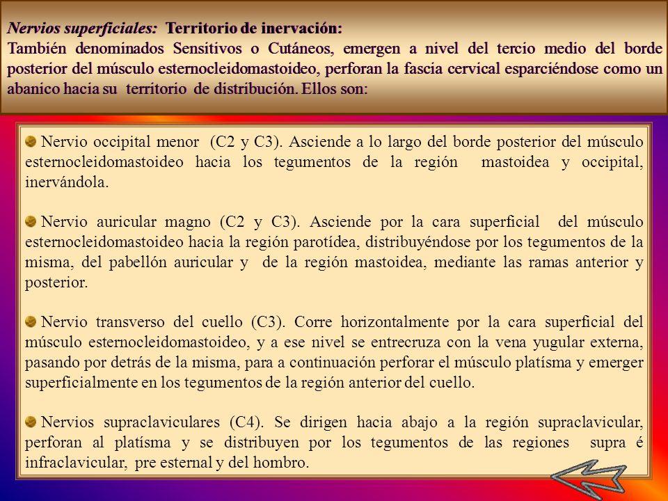 Nervios superficiales: Territorio de inervación: