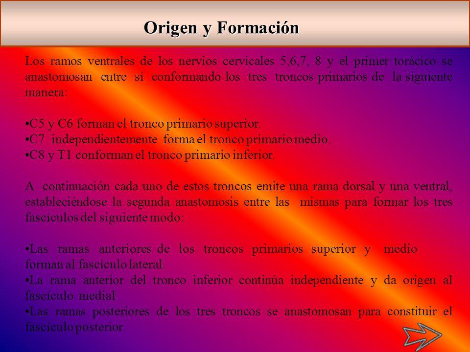 Origen y Formación