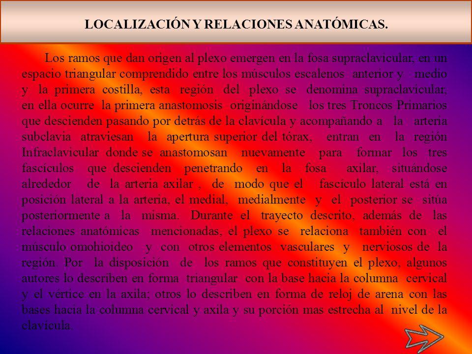 LOCALIZACIÓN Y RELACIONES ANATÓMICAS.