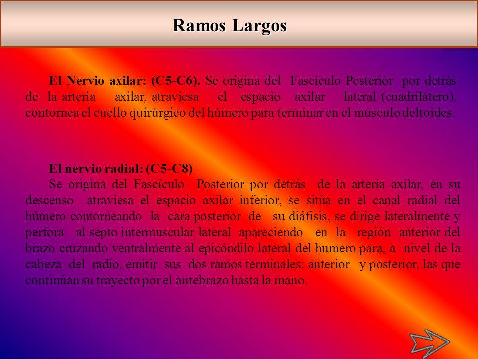 Ramos Largos