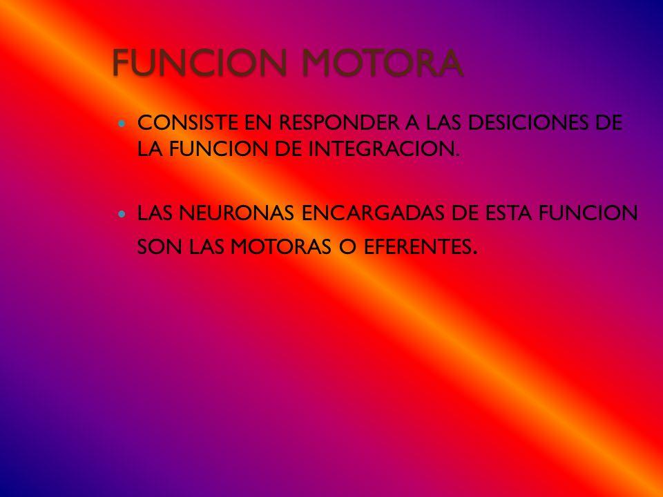 FUNCION MOTORA CONSISTE EN RESPONDER A LAS DESICIONES DE LA FUNCION DE INTEGRACION.
