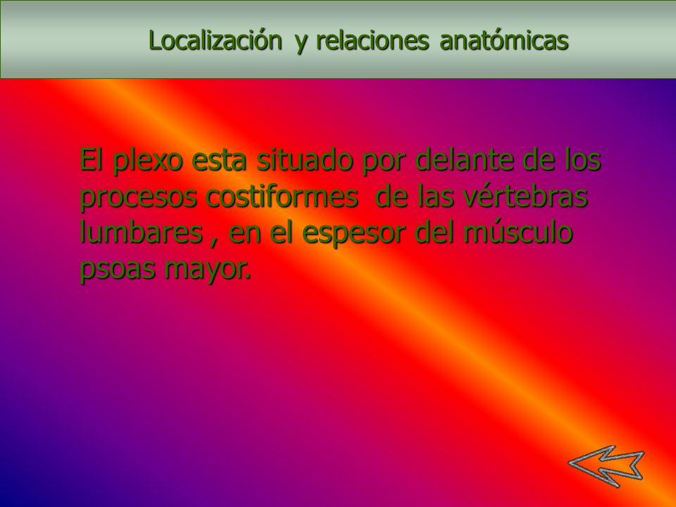 Localización y relaciones anatómicas
