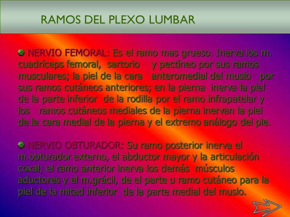 RAMOS DEL PLEXO LUMBAR