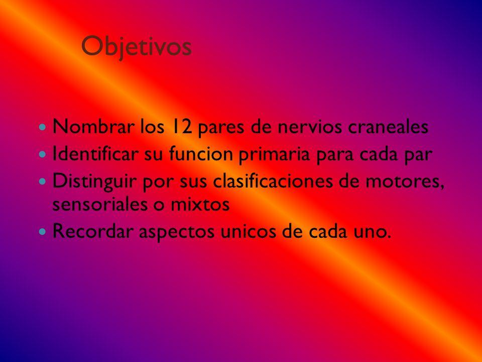 Objetivos Nombrar los 12 pares de nervios craneales